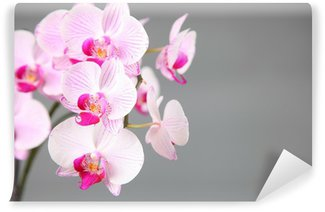 Pink orchid Wall Mural - Vinyl