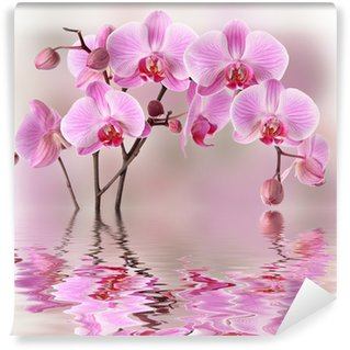 Pink orchids with water reflexion Wall Mural - Vinyl