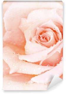 Pink wet rose background