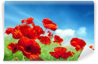 Poppy flowers on field