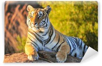 Portrait of a Tiger Wall Mural - Vinyl