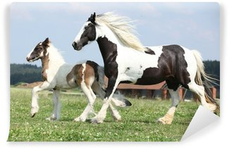 Portrait of nice arabian horse