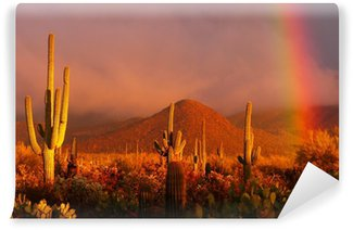 Rainbow sunset at the Saguaro National Park, Arizona, USA Wall Mural - Vinyl