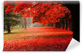 Vinyl Wall Mural red autumn in the park