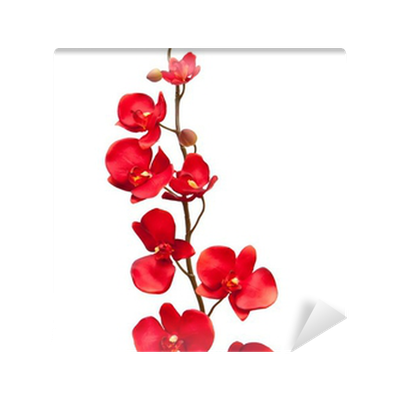 Red orchid flower on white background Wall Mural • Pixers ...