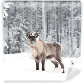 reindeer Wall Mural - Vinyl
