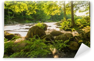 River in the forest Wall Mural - Vinyl