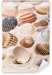 Wall Mural - Vinyl Sea shells with coral sand