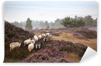 sheep on purple blooming heather Wall Mural - Vinyl
