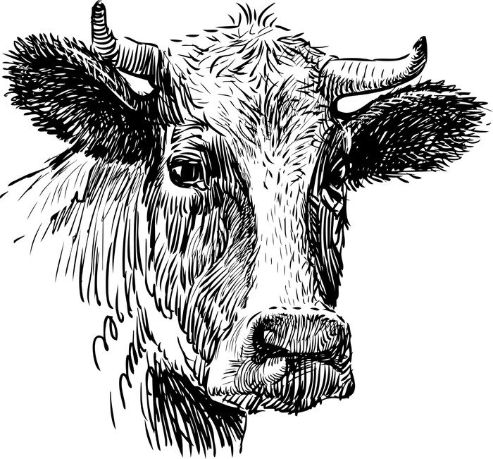 Line Drawing Cow Face : Snout cow vinyl wall mural pixers we live to change
