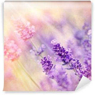 Soft focus on beautiful lavender - lit by sunbeams Wall Mural - Vinyl