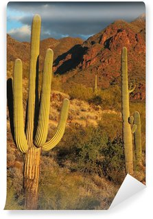 Sonoran desert landscape and cactus details Wall Mural - Vinyl