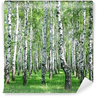 Vinyl Wall Mural Spring birch forest with fresh greens