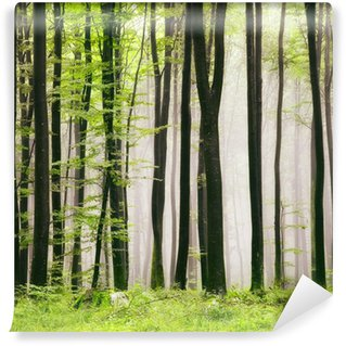 Spring forest Wall Mural - Vinyl