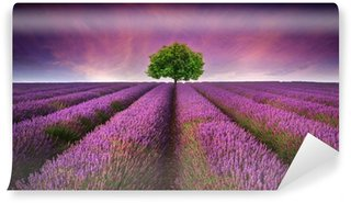 Wall Mural - Vinyl Stunning lavender field landscape Summer sunset with single tree