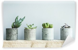 Wall Mural - Vinyl Succulents in diy concrete pot. Scandinavian room interior decor