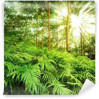 Sun rays in forest Wall Mural - Vinyl