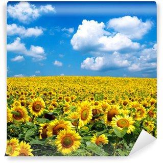 sunflower field Wall Mural - Vinyl