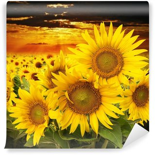 sunflowers on a field and sunset Wall Mural - Vinyl