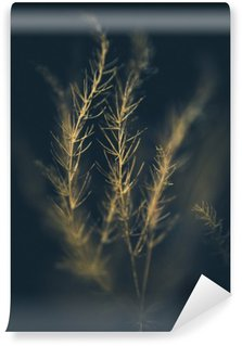 Sunlit Grass Wall Mural - Vinyl