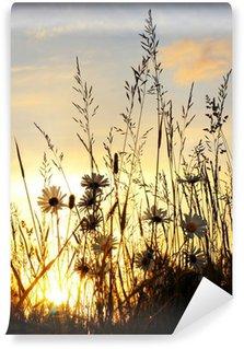 sunset on daisy field