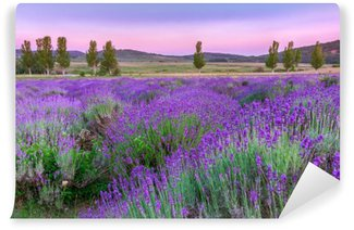Wall Mural - Vinyl Sunset over a summer lavender field in Tihany, Hungary