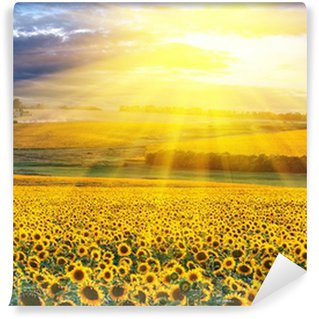 Sunset over the field Wall Mural - Vinyl
