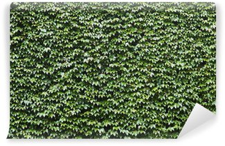 The wall overgrown with ivy
