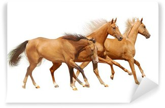 three horses on white