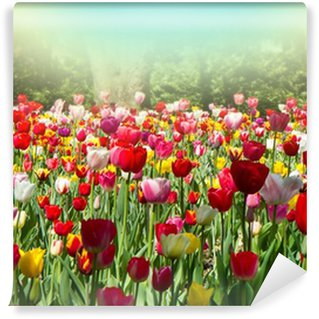 tulipani Wall Mural - Vinyl