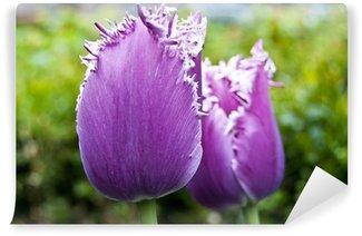 "Tulipes violettes ""dentelles"" Wall Mural - Vinyl"