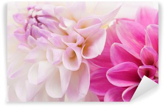 Two dahlias background Wall Mural - Vinyl