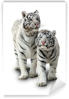 Wall Mural - Vinyl Two white tigers