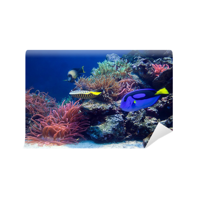 Underwater life, Fish, coral reef Wall Mural • Pixers ...