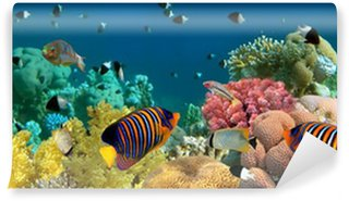 Vinyl Wall Mural Underwater panorama with Angel fish, coral reef and fishes. Red