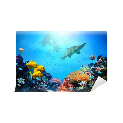 Underwater scene. Coral reef, fish groups, sharks Wall ...