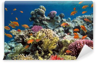 Wall Mural - Vinyl Underwater shoot of vivid coral reef with a fishes