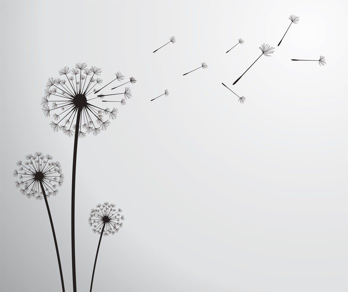 Vector dandelion vinyl wall mural pixers we live to for Mural vector