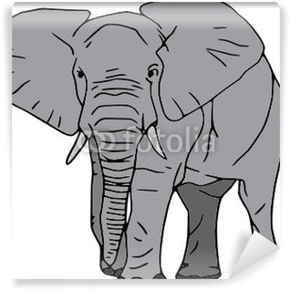 Vector - elephant isolated on white background Wall Mural - Vinyl