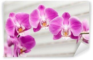 violet orchid flower Wall Mural - Vinyl