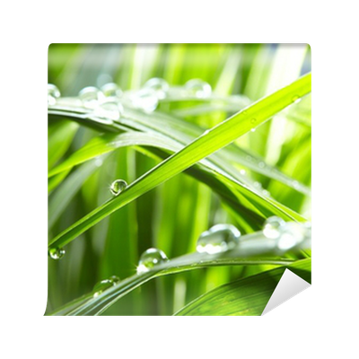 water drops on the green grass Wall Mural • Pixers® • We ...