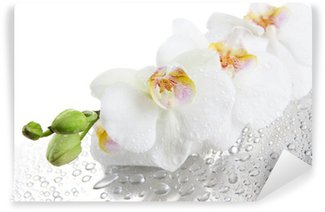 white beautiful orchids with drops Wall Mural - Vinyl