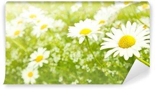 White daisy flowers Wall Mural - Vinyl