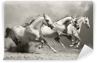 Wall Mural - Vinyl white horses in dust