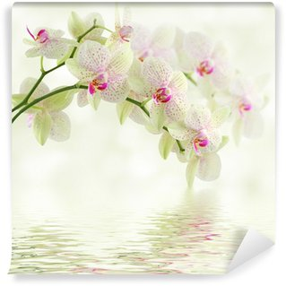 Vinyl Wall Mural White orchid on a light background