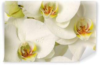 white orchids Wall Mural - Vinyl