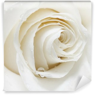 white rose Wall Mural - Vinyl
