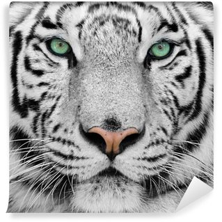 Wall Mural - Vinyl white tiger