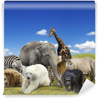 Wild animals group Wall Mural - Vinyl