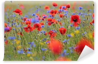 Wild flower meadow with poppies and Cornflowers with selective focus on poppy